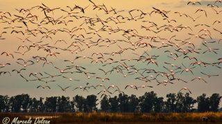 Avistaje de aves: «mirar, escuchar, y encontrar»