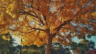 Tardes de otoño